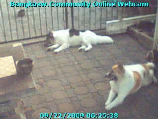 Bangkaew Webcam